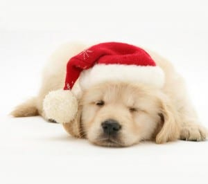 Cute-Christmas-Dog