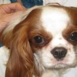 Dog Daycare Virginia