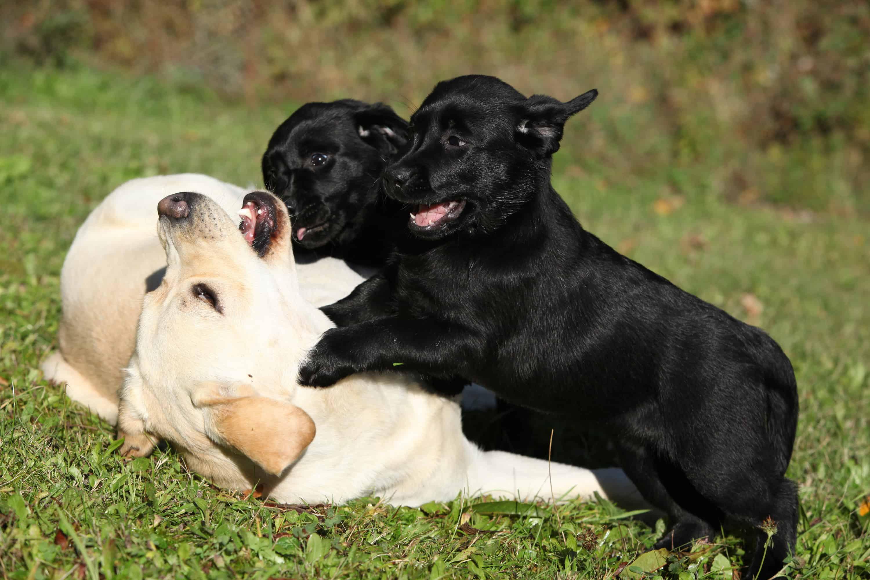 dog daycare VA