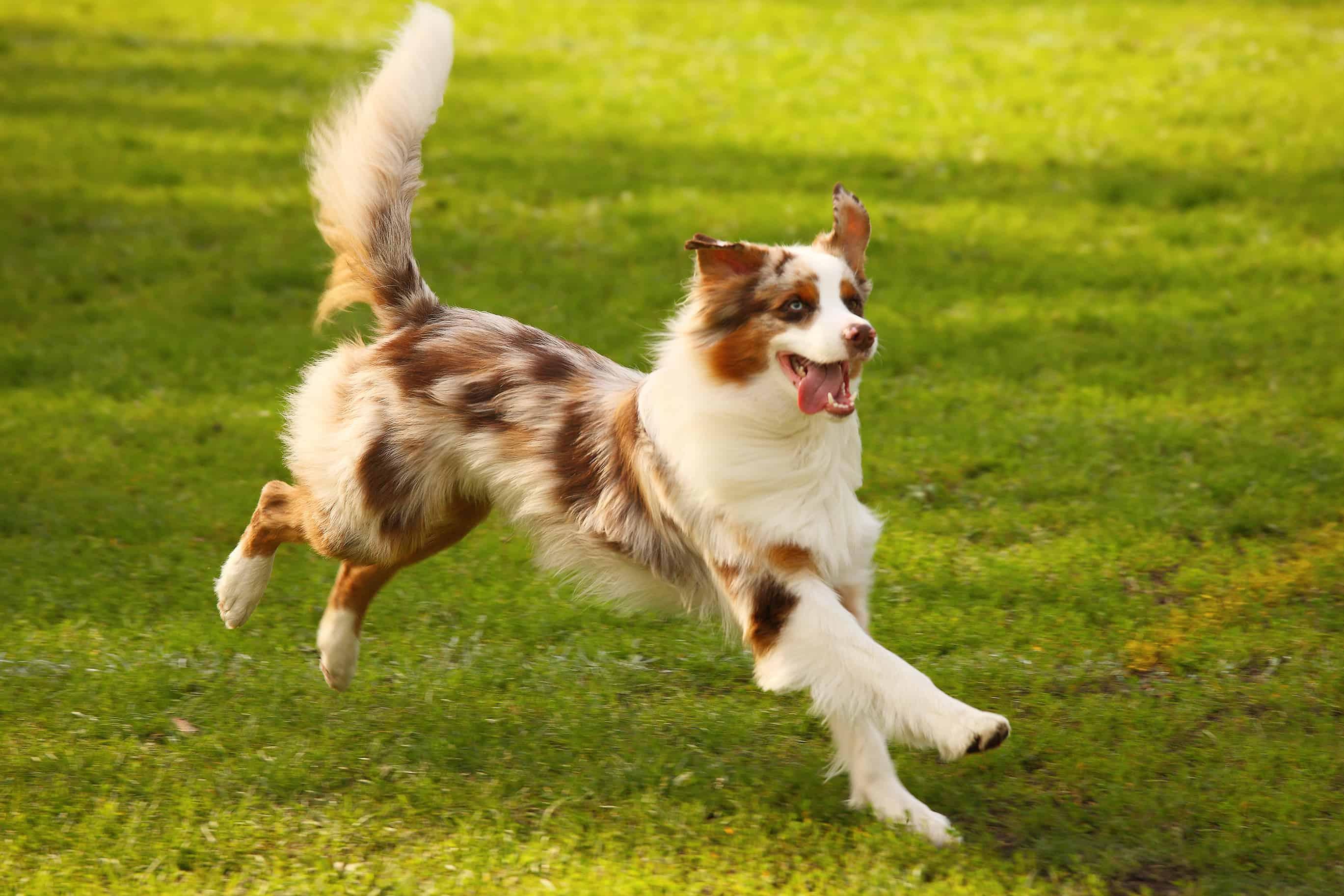 dog play – Copy