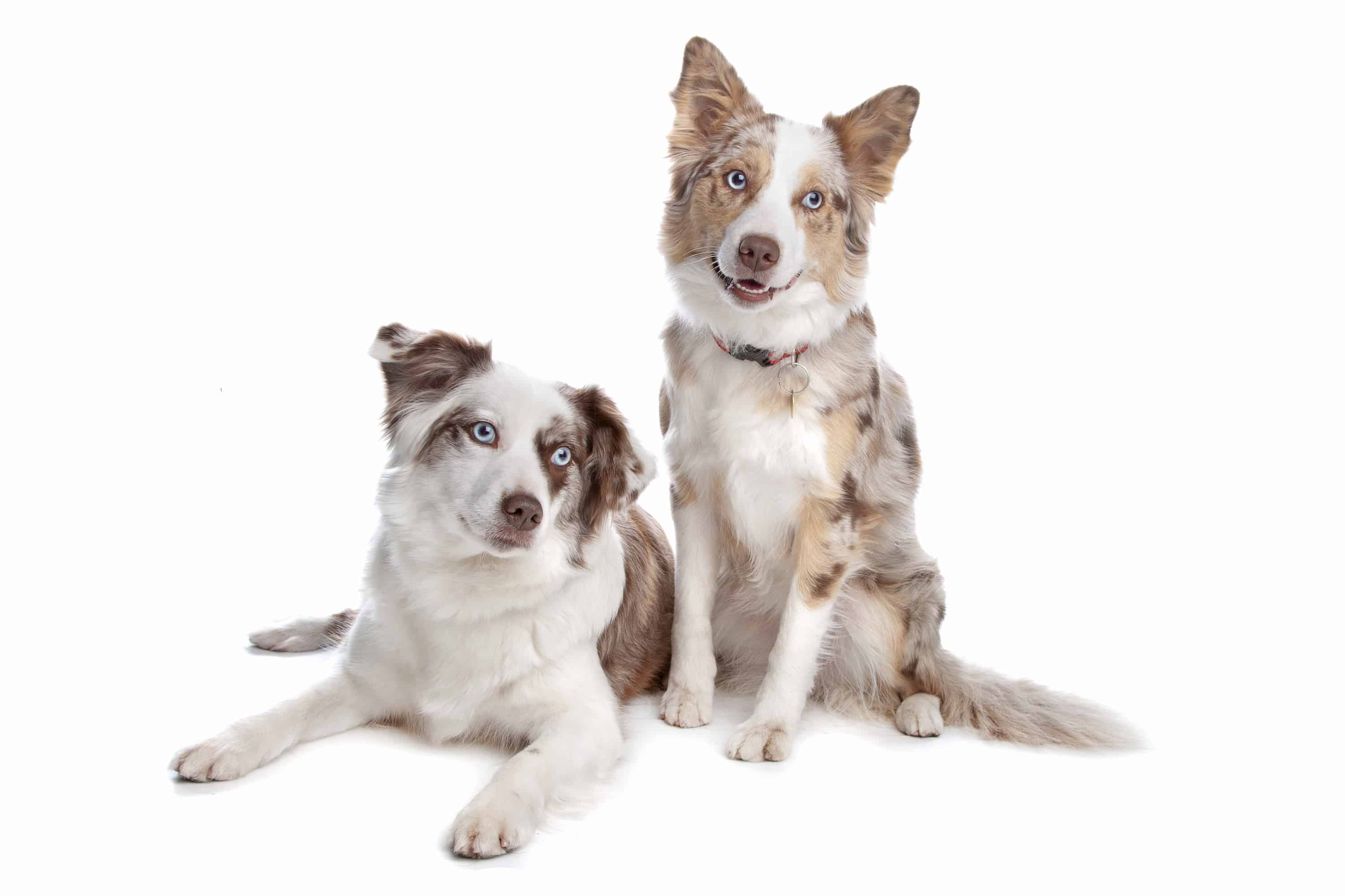 dogs at daycare – Copy